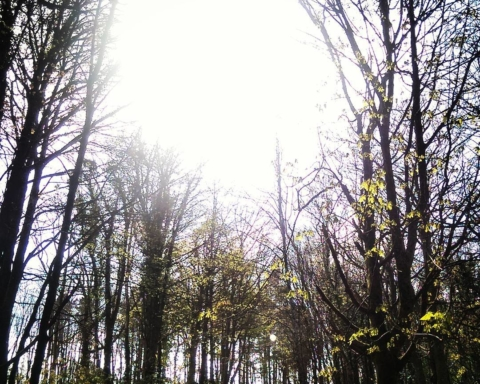 Kilrush Woods