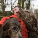 Ronan Behan age 5 from Kildimo County Limerick with the Irish Wolfhounds at Bunratty Castle and Folk Park. Picture Sean Curtin True Media.